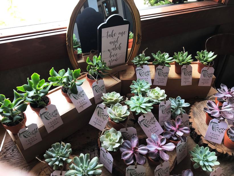 Plant wedding favours