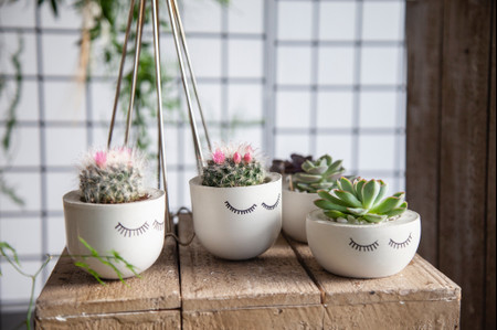 10 Creative Ways to Use Cacti and Succulents in Your Wedding Decor