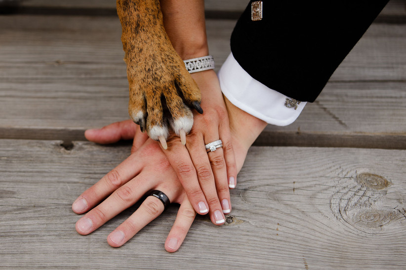 Bride and Groom's hands with their dog's paw