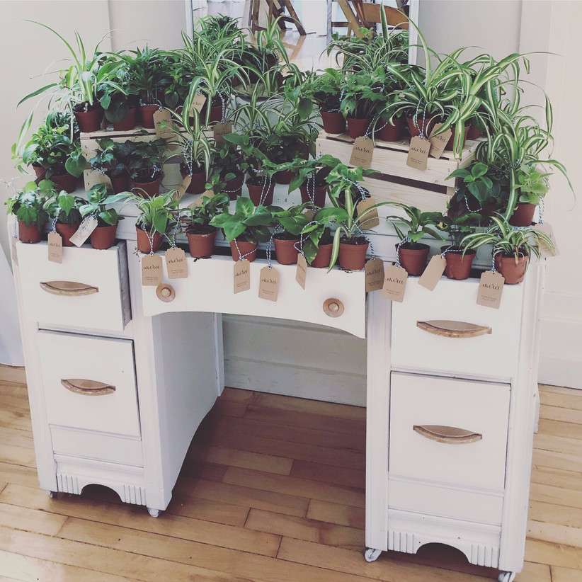House plant wedding favours displayed on a vintage dresser
