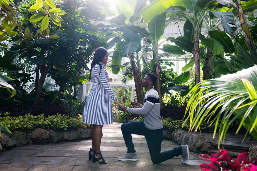 Allan Gardens marriage proposal