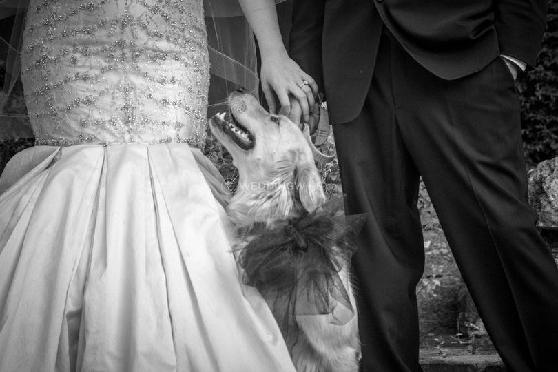 Furr Baby Wedding Guest