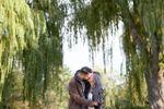 Toronto island willows