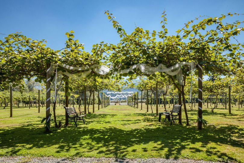 Make your vineyard procession