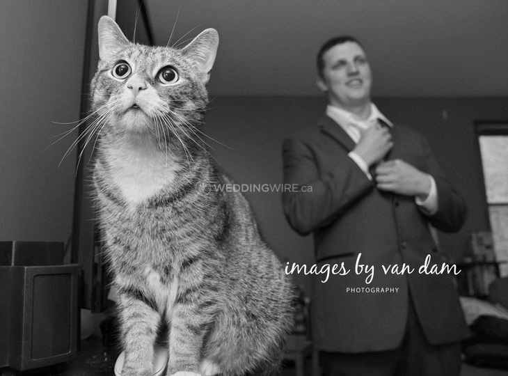 Cat looks on as Groom ties tie