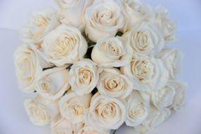 Stellina Flowers