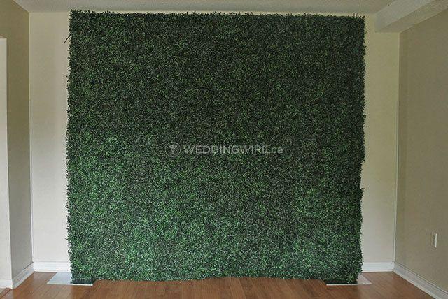 Plain Boxwood Hedge Wall