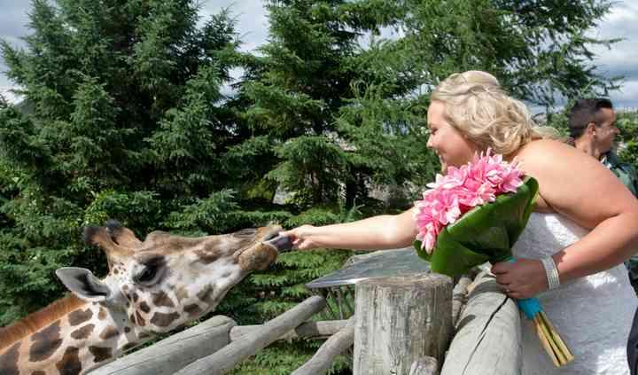 Feed the giraffes