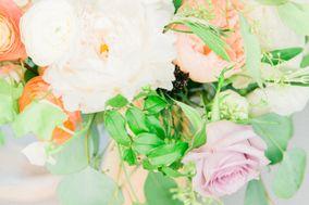 Plum Rose Photography