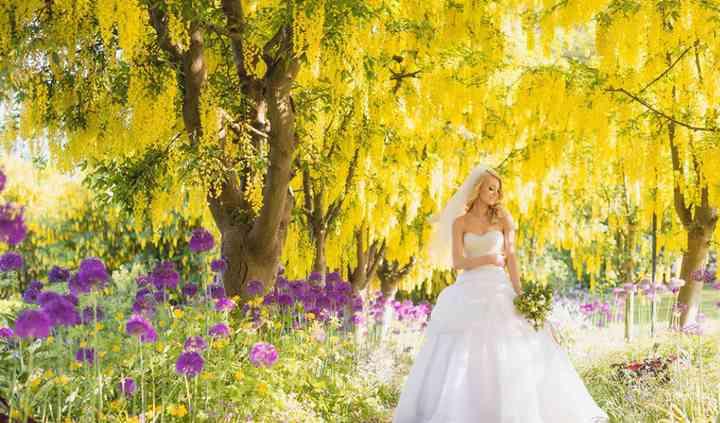 Laburnum Walk in bloom (May)
