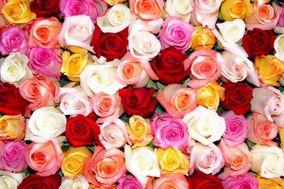 Xpressive Roses