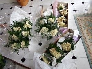 Bunches Direct Canada