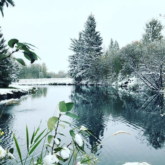 Pond after first snow fall