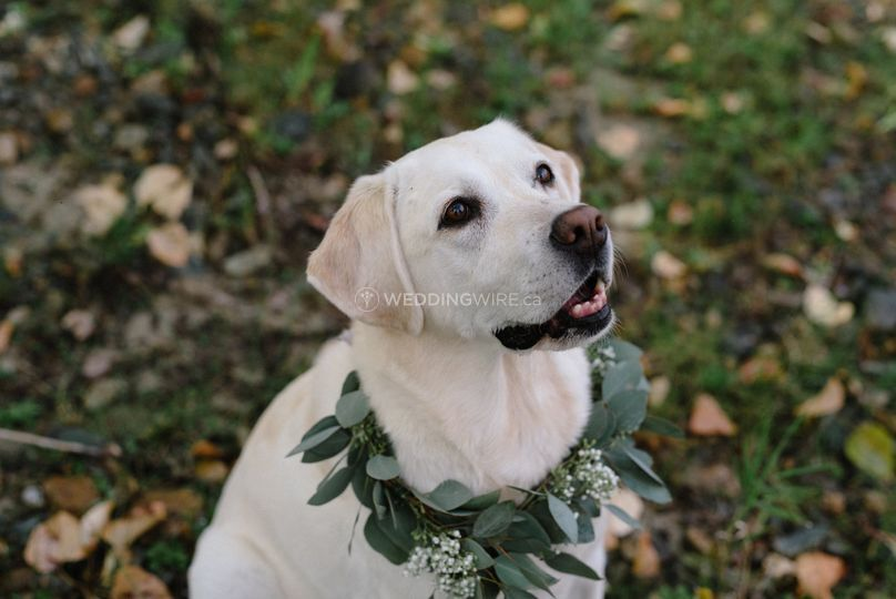 Eucalyptus dog collar