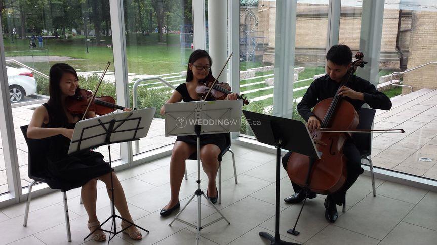 RoseCourt Strings