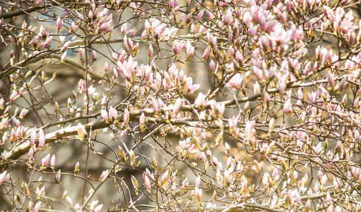 Kiss me under the Magnolia