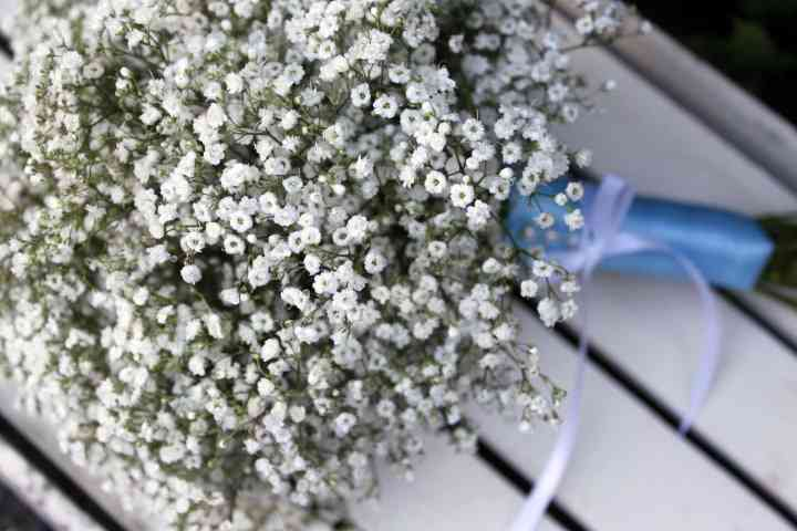 Foxgloves Flowers