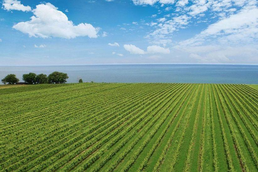 Konzelmann Estate Winery 1
