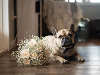 The wedding of Allysha and Trevor 3