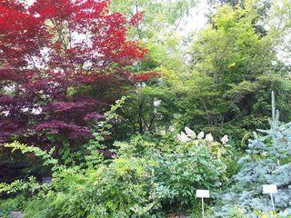 Toronto Botanical Garden 1