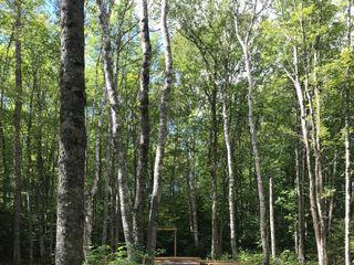 TreeTop Haven 2
