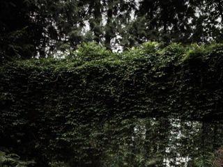 Wild Ivy Designs 4