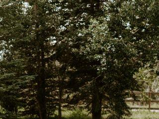 Pine and Pond 5
