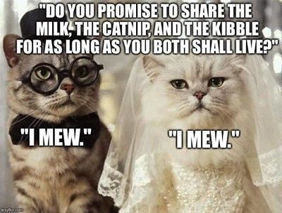 Just for laughs wedding memes and more - 14