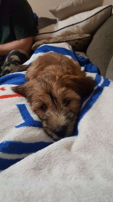 We got a puppy! 1