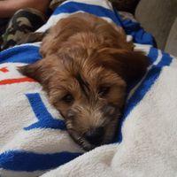 We got a puppy! - 1