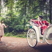 wedding transportation horse and carriage
