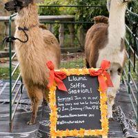 wedding reception entertainment llama selfie station