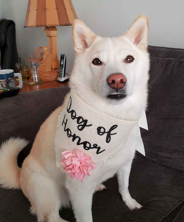 Dog of Honour