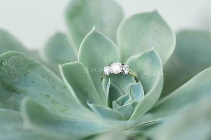 three stone ring succulent